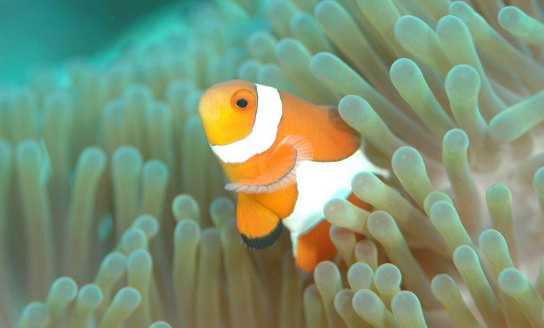 Photo of A Marly, on se sent comme un poisson dans l'eau
