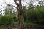A découvrir au Jardin botanique de Metz : des espèces venues des tropiques et d'ailleurs