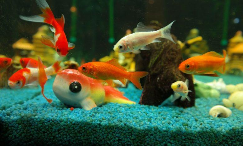 Photo of Bourse aux poissons à Marly ce dimanche