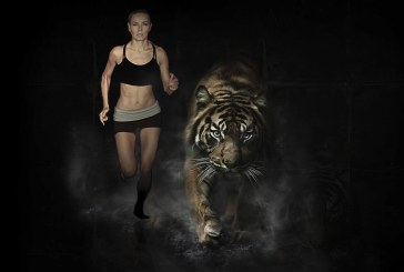 Run for Tigers : une course caritative dans le zoo d'Amnéville