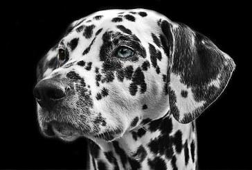 Un concours de beauté pour chiens organisé à Metz