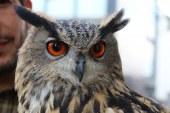 Condé-Northen : la fin d'un trafic d'oiseaux rares et protégés (photos)