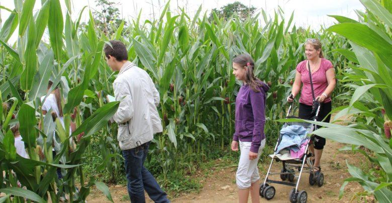 Photo of Labyrinthe en Lorraine : un défi à relever en famille
