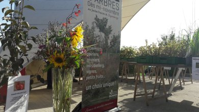 Photo of Jardins de Laquenexy : grande vente d'arbres fruitiers