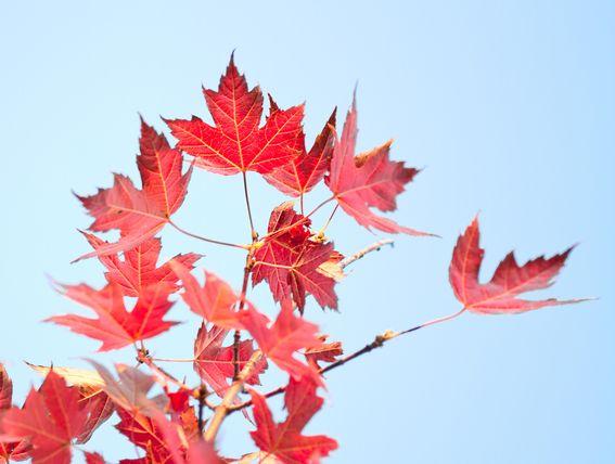 Un air d'automne