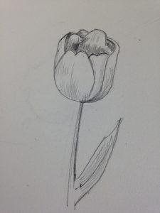 Comment dessiner une tulipe r aliste en 3 tapes art express - Tulipe a dessiner ...