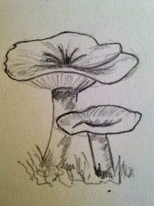 Apprendre dessiner un champignon en 10 min art express - Dessiner un champignon ...