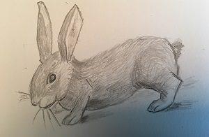 Apprendre à dessiner un lapin en 5 minutes