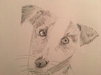 Comment dessiner le portrait d'un chien