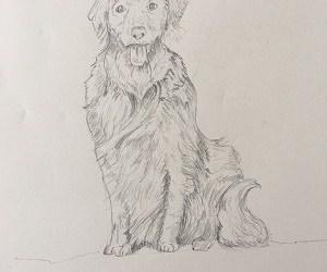 Apprendre à dessiner un chien et ses poils facilement