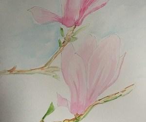 Comment peindre facilement  un magnolia à l'aquarelle.