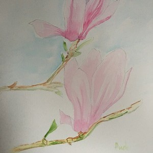 Magnolias à l'aquarelle