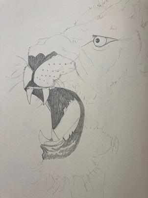 Comment dessiner un lion rapidement.