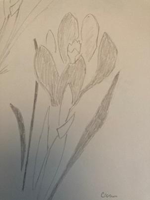 Hachurage de la fleur