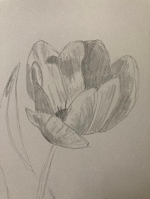 Une tulipe réaliste