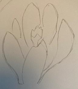 La fleur de crocus