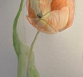 Comment dessiner une tulipe en moins de 10 min