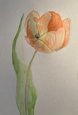 Tulipe à l'aquarelle