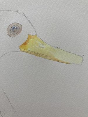 Comment peindre un canard rapidement