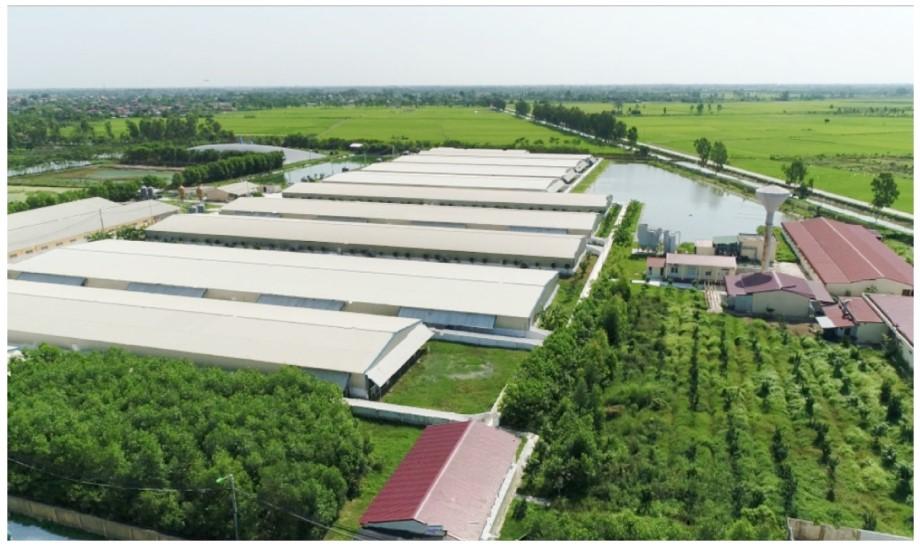 Tập đoàn Dabaco Việt Nam tạo lợi nhuận đích thực DBC 2020