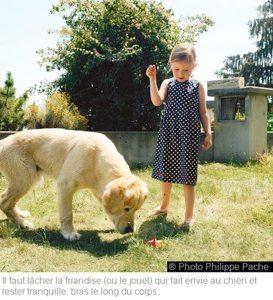Il faut lâcher la friandise (ou le jouet) qu fait envie au chien et rester tranquille, bras le long du corp