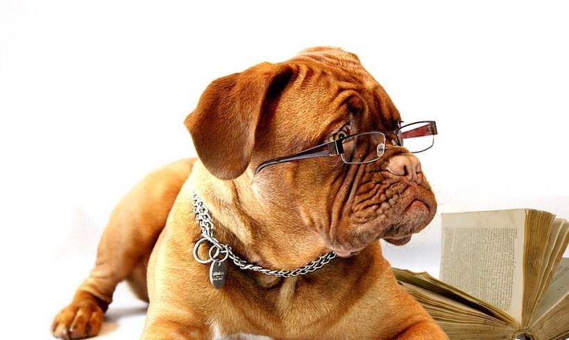 Quel âge à votre chien?