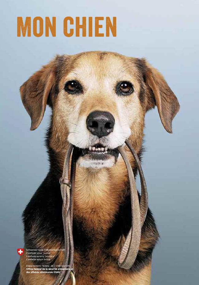 """""""Mon chien"""" – la nouvelle brochure de l'OSAV sur les chiens"""