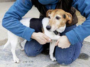 Lorsqu'ils doivent être soignés, les chiens sont en général beaucoup plus dociles que les chats.