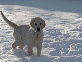 Le chien et la neige : 4 conseils pour le protéger