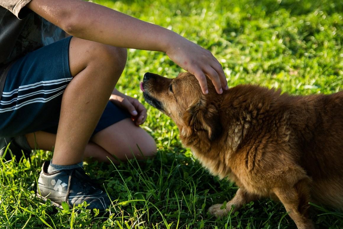 Caresser un chien