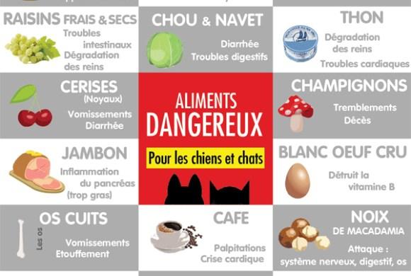 7 aliments les plus dangereux pour les chiens et chats