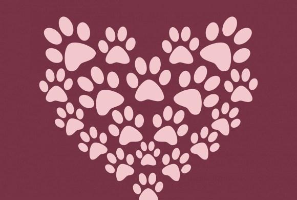 Le saviez-vous ? Votre cœur et celui de votre chien sont connectés !