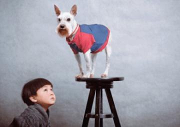 Même pas peur des chiens