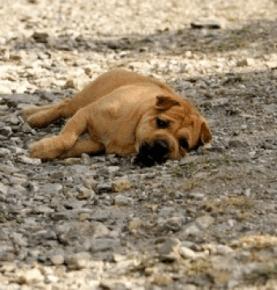Comment protéger son chien de la chaleur cet été ?