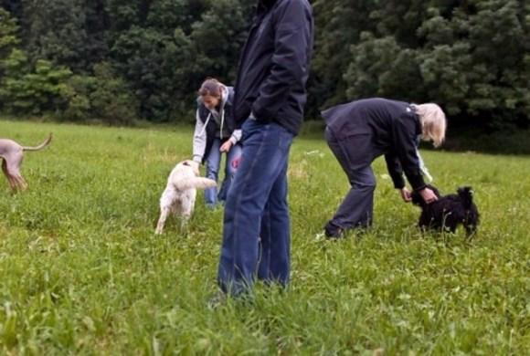 Cours maintenus pour posséder un chien