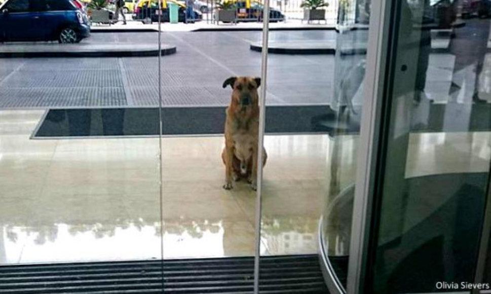 Argentine : Un chien errant la suit partout, elle l'adopte