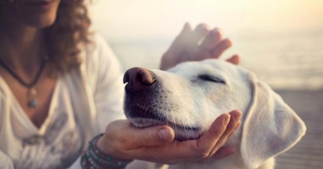 Les bons gestes à faire pour flatter son chien