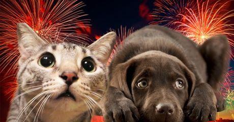 31 décembre – Attention aux feux d'artifices