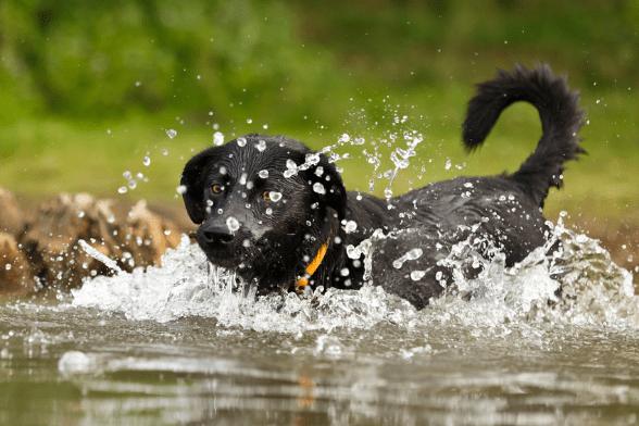 Protéger son chien de la canicule