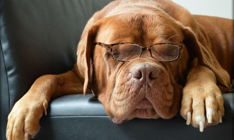 Non, votre chien n'a pas 4×7=28 ans