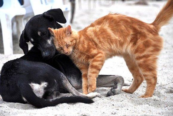 Le 4 octobre c'est la journée mondiale des animaux