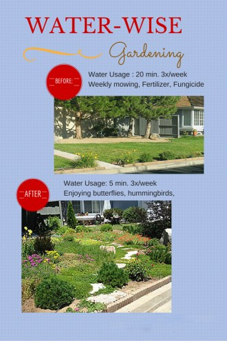 Water-wise gardens groundcovers