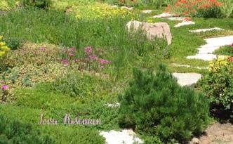 water-wise garden plants