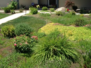 Lawn replacement with ground cover plants
