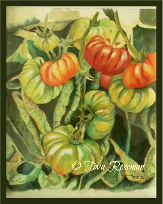 ripen-tomatoes-on-the-vine