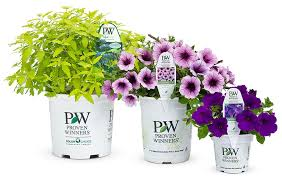 Proven Winners shrubs and flowers