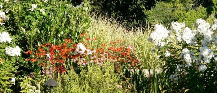 Healing in the Garden