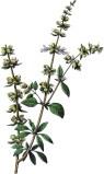 herbal image