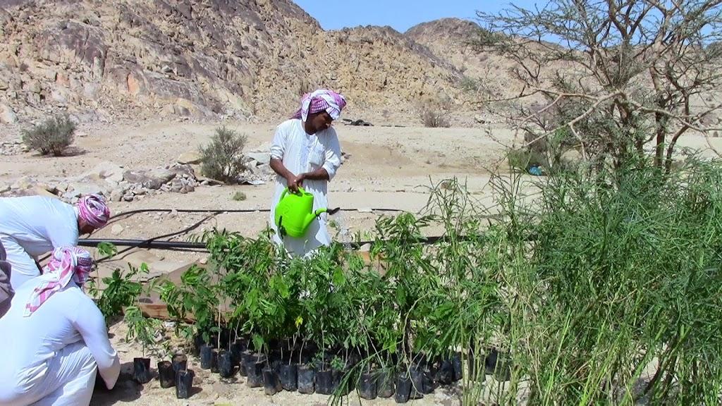 Indiase man eentje planten een 1 360 hectare bos