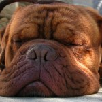 Tips on Sleep Help